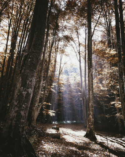 Amazing light rays on a beautiful autumn morning Autumn Landscape_Collection Light Morning Rays Of Light Sunlight Tranquility Amazing Beauty In Nature Beauty In Nature Day Forest Landscape Landscape_photography Nature Nature_collection No People Outdoors Scenics Sun Sunlight And Shadow Tranquil Scene Travel Destinations Tree Tree Trunk