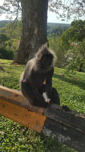 Monkey Eat EmNewHere Tree Monkey Sitting Ape Primate Animal Themes Grass Close-up Sky Tropical Rainforest Rainforest Tree Trunk