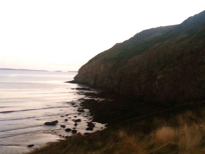 Sea Cliff Grass