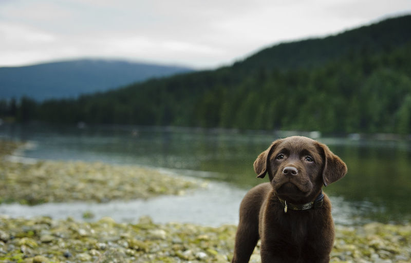 Dog standing on pebbles by lake with trees