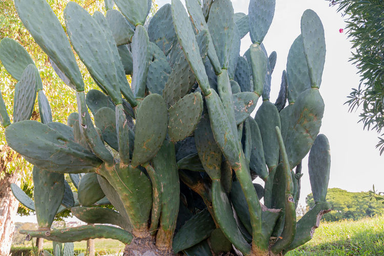 Cactus on the