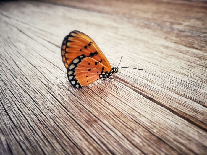 Close-up of butterfly perching on wood