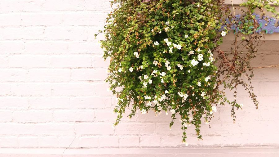 Plants Planterbox Whitewall Simple Flowers Middleofdecember