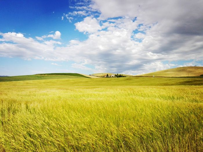 First Eyeem Photo Landscape Tuscany Blue Sky Grass Italy