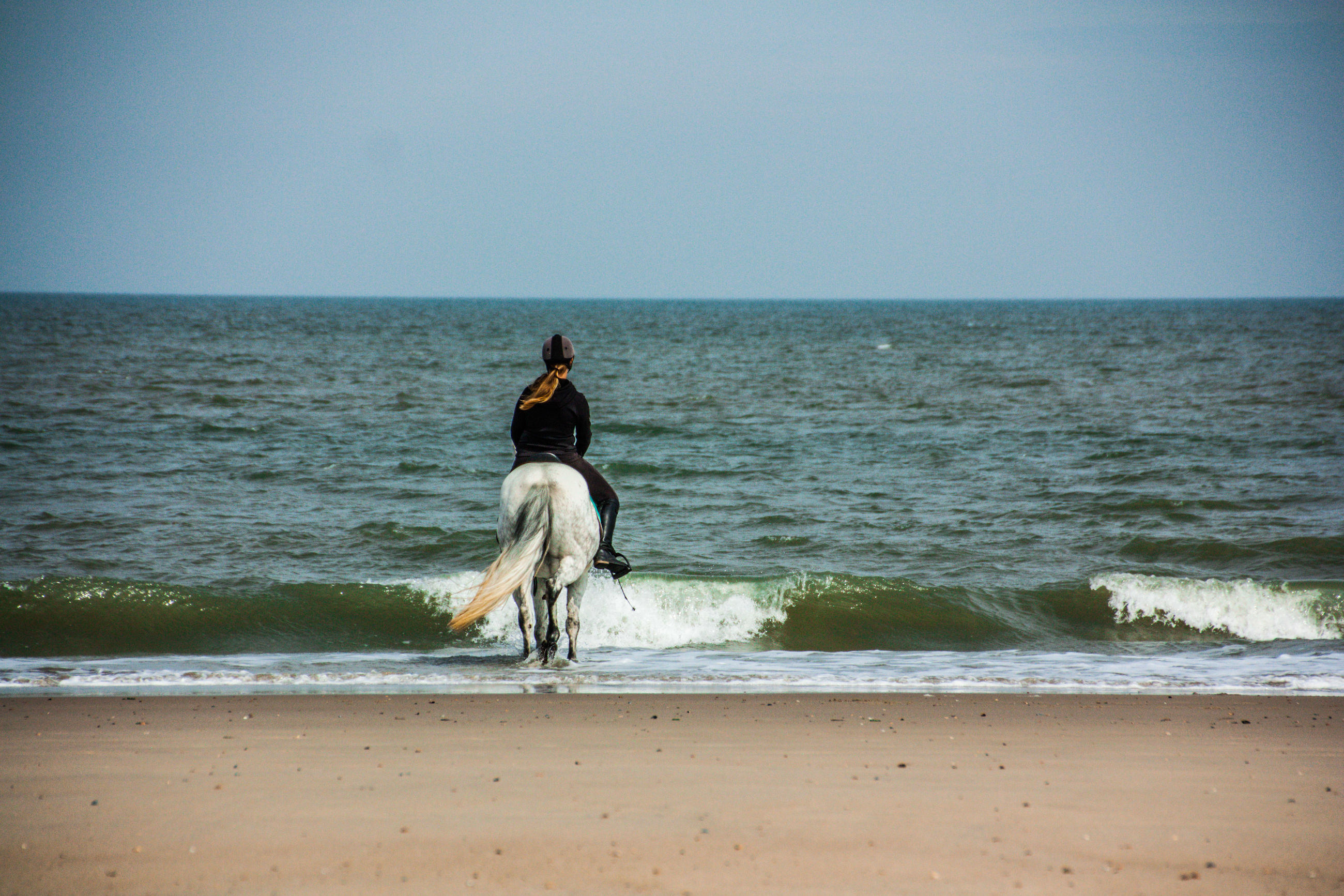 sea, water, beach, horizon over water, land, horizon, sky, ocean, body of water, horse, shore, nature, rear view, wave, motion, one person, full length, vacation, sand, domestic animals, beauty in nature, coast, leisure activity, pet, clear sky, mammal, day, scenics - nature, adult, lifestyles, animal, sitting, one animal, horseback riding, outdoors, riding, animal themes, holiday, tranquility, trip, person, activity, tranquil scene, sunny, dog, women