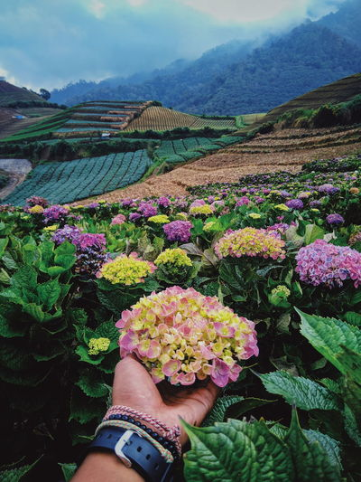 flower in cangar, malang Flower Human Hand Sky Plant Landscape Close-up Farmland Personal Perspective Cultivated Land Human Foot Shoe Flower Head Agricultural Field Low Section Crop  Rice Paddy Canvas Shoe Plantation Footwear Human Leg Oilseed Rape Feet Growing Blooming