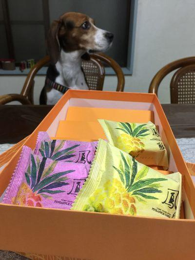 Pineapple Cake Taiwan Food Beagle Iliveinjapan