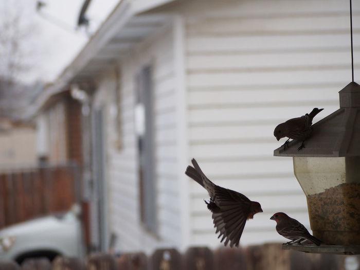 Birds perching on feeder against house