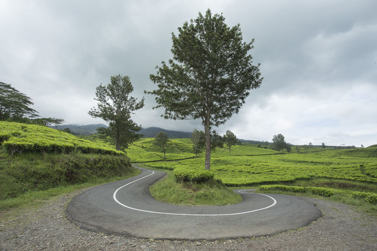Scenic view of road by trees against sky