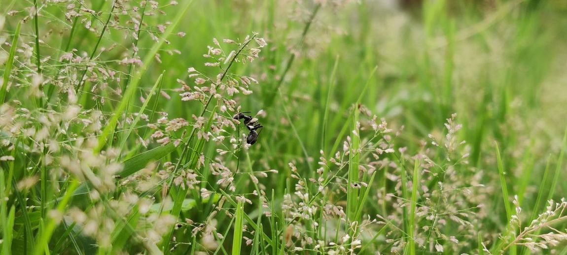 View of insect on plant