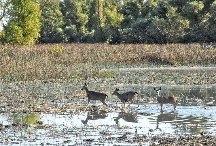 View of deer on field by lake