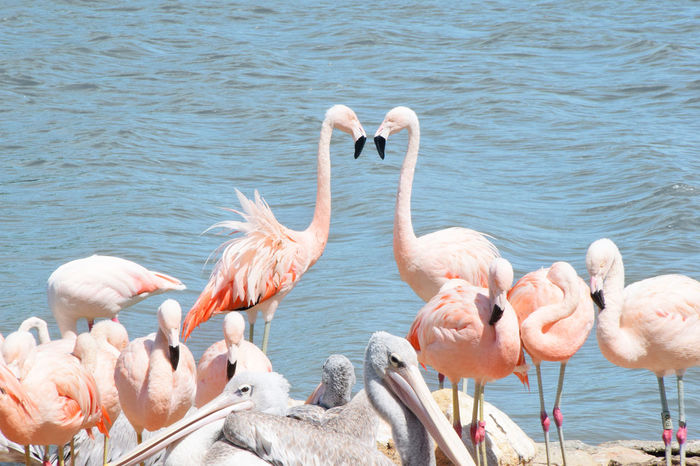 Animal Photography Animal Themes Animal Wildlife Animals Animals In The Wild Animals In The Wild Beak Beauty In Nature Captivity Feathers Flamingo Flamingos Large Group Of Animals Nature Nature Photography No People Outdoors Pink Staring Togetherness Water Zoology