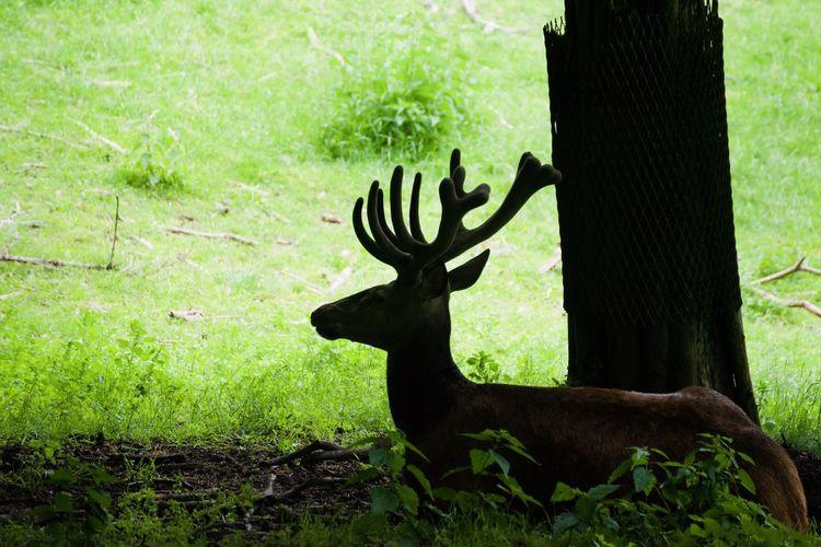 View of deer on tree trunk