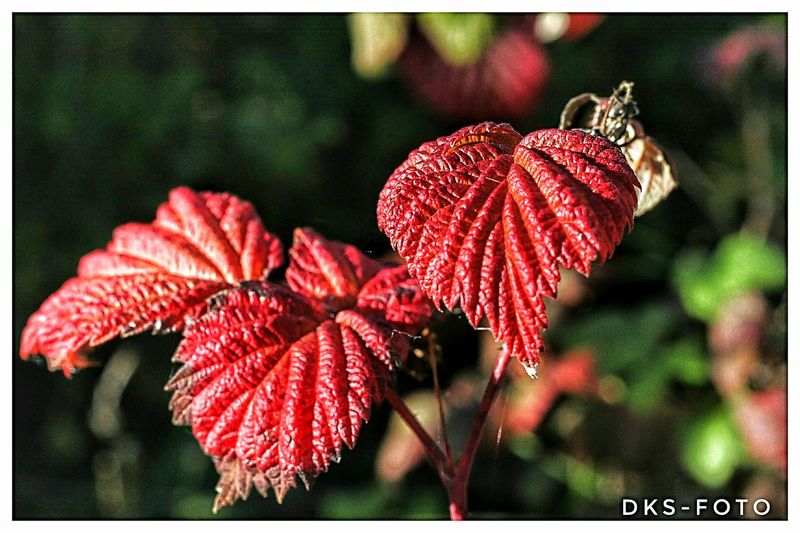Sweden The True Story Eskilstuna Flower Head Flower Red Pink Color Close-up Plant