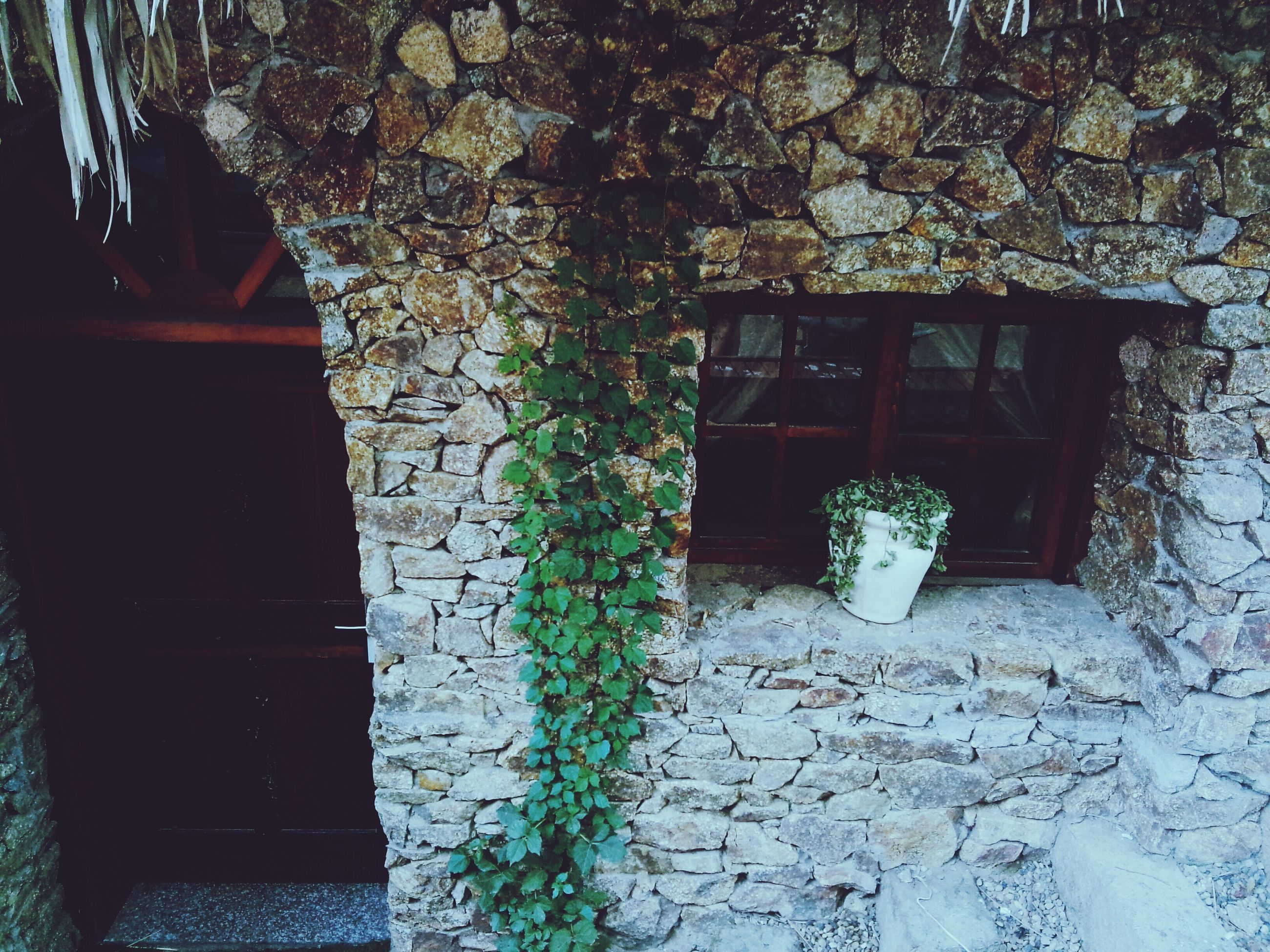 built structure, architecture, house, building exterior, window, plant, growth, door, wall - building feature, brick wall, closed, wall, ivy, potted plant, tree, residential structure, front or back yard, no people, wood - material, day