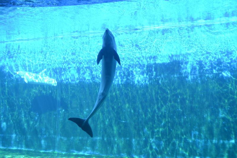 Acquario Di Genova Beauty In Nature Blue Delphin Freedom H2o H2o_natura Italia Italy Nature See
