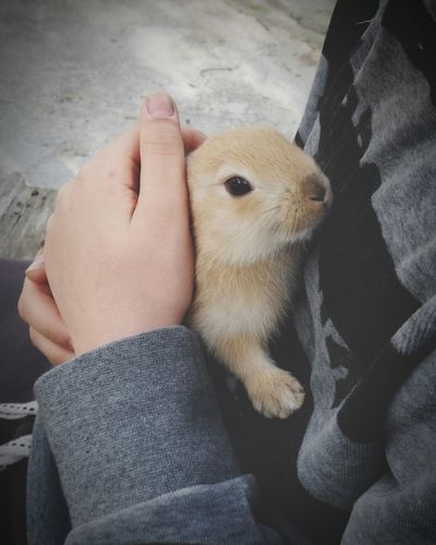 Rabbit Pets Friendship Dog Low Section Women Child Human Hand Close-up Moments Of Happiness