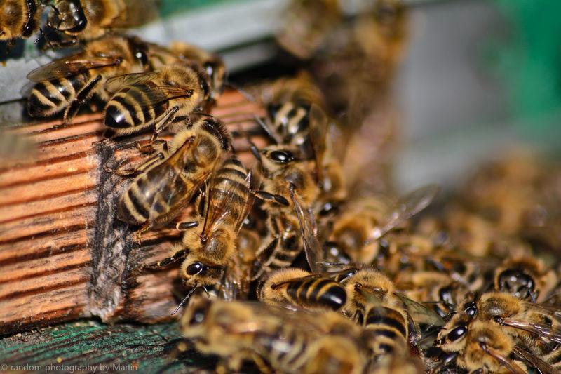 Pszczół cała