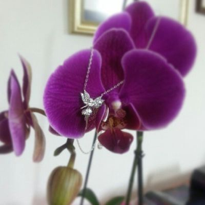 Back to Work ! Office LUSSO Jewelry Jewelrylovers Jewelblog Aniyakala Inspiration Orchids Instaflower Angel Necklace