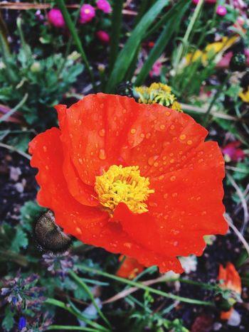 Red RedFlower Flowerafterrain
