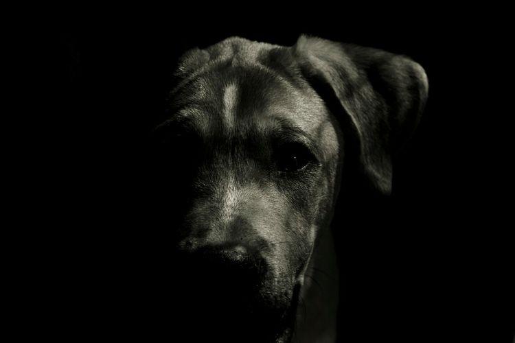 One Animal No People Dog Dogs Of EyeEm Dog Lover Blackandwhite Photography Animal Themes My Dog Amateurphotography MyLifeInPictures