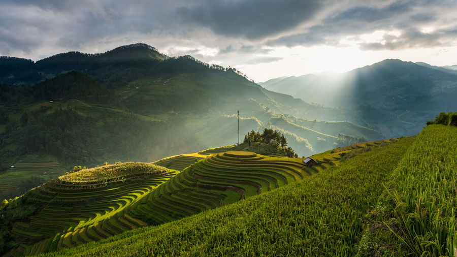Beautiful landscape Rice fields on terraced of Mu Cang Chai, YenBai, Vietnam. Nature Rays Of Light Vietnam Agriculture Cloud - Sky Crop  Environment Farm Field Green Color Growth Land Landscape Mountain Mountain Range Mu Cang Chai Outdoors Plant Rice Fields  Scenics - Nature Sky Sunset Terrace Tranquility Yenbai, Vietnam