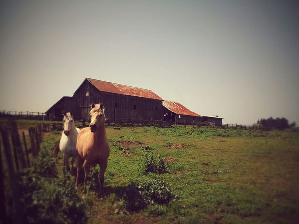 Taking Photos Enjoying Life The Great Outdoors Ranch Life What I Did Today Animals Old Barns ~Moose & Tardy wanted to help~