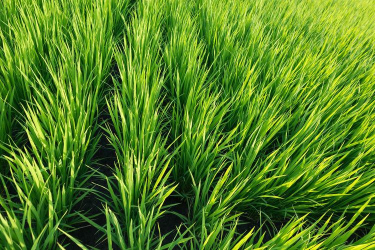 Full frame shot of palm leaf on field
