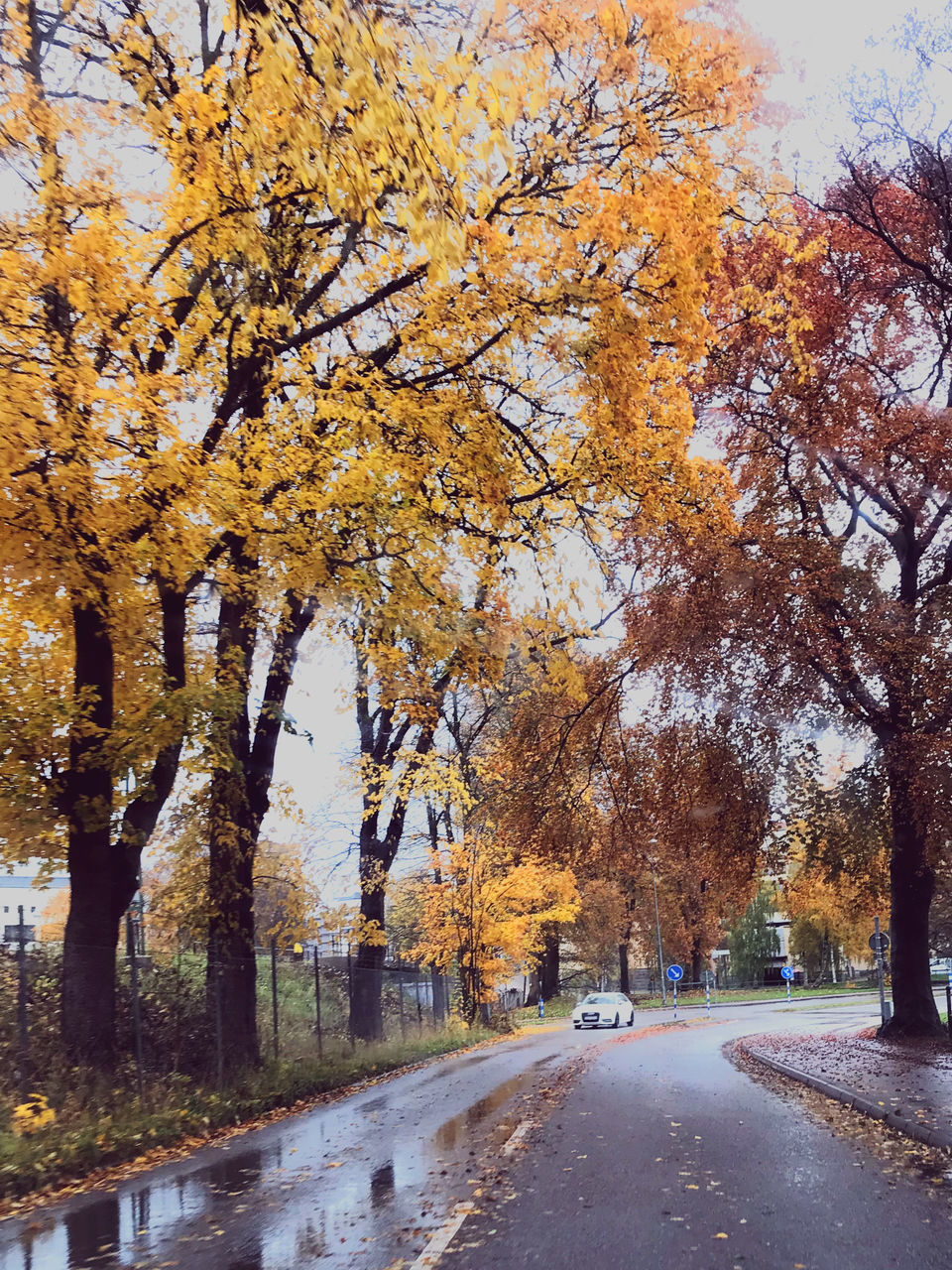 STREET AMIDST TREES DURING AUTUMN