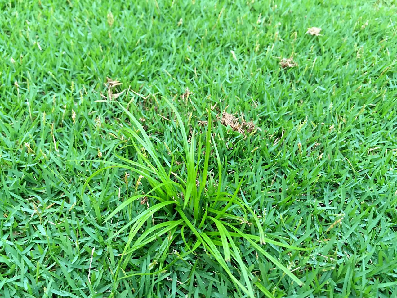 grass, green color, field, high angle view, growth, nature, no people, outdoors, full frame, day, plant, close-up