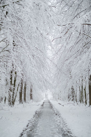 Scenic view of snow covered trees