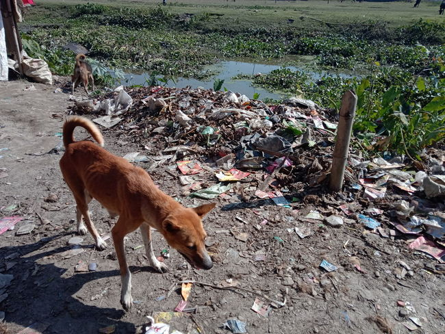 Dog Garbage Lake Dirty Animal Themes Domestic Animals Mammal Day One Animal Field Outdoors No People Nature Sunlight Standing EyeEmNewHere EyeEm Ready