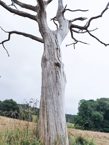 Tree Tree Trunk Branch Nature No People Day Outdoors Growth Grass Sky Close-up Magic Landscape Branches Trees Scenics Tranquil Scene Halloween Eery Magical Tree Bark Texture Yorkshire Bark Bare Tree Nature
