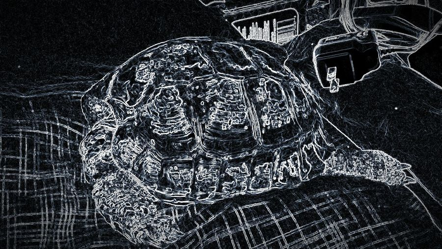Low Angle View Close-up Single Object Tortoise Tortoiseshell Turtles Tortoise Pet Sleeping Sleeping Pet Russian Tortoises Low Angle View Hanging Electric Light No People Intricacy
