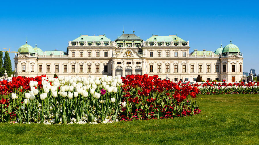 Tulips and Belvedere Castle in Vienna, Austria Building Exterior Architecture Plant Flowering Plant Flower Sky Built Structure Dome Travel Destinations Nature History The Past Blue Government Clear Sky City Grass Building Travel Façade No People Belvedere Tulips Flowers Castle Belvedere Castle Vienna Austria Blue Sky Landmark Sighsteeing Green Lawn Beautiful Austria ❤ Austrian Architecture Architecture Historic Historical Building