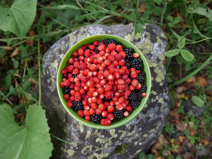 High angle view of berry fruits in bowl on rock