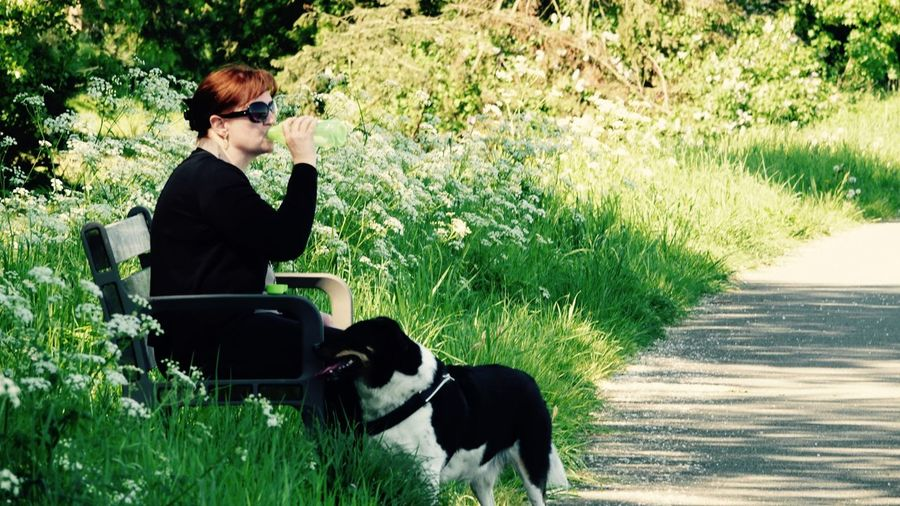 Side View Of Woman Sitting On Bench By Dog At Park