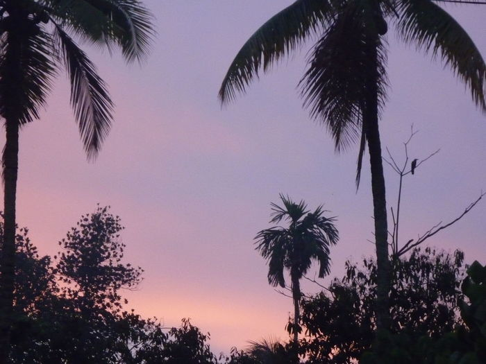 I accidently woke up early. Color Palette Morning Morning Sky Morning Sky, Outdoors Purple Purple Sky Sky Nofilter Noedit