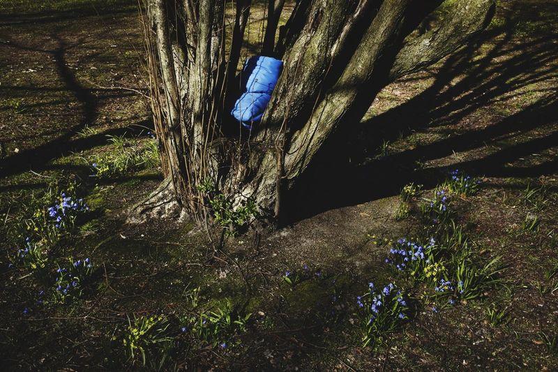 Boplats? Vackert i Allen. Här finns grönska. Hemlös, vad finns det för alternativ? Säkra din sovsäck i trädets kärna, det ska skydda dig. Var finns härbergen för våra medmänniskor? Göteborgs komun behöver agera nu. Hemlös