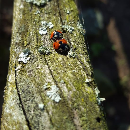 Love in the Air Animal Themes Animals In The Wild Insect Nature Ladybug Outdoors No People Animal Wildlife Beauty In Nature Beauty In Nature Little Things