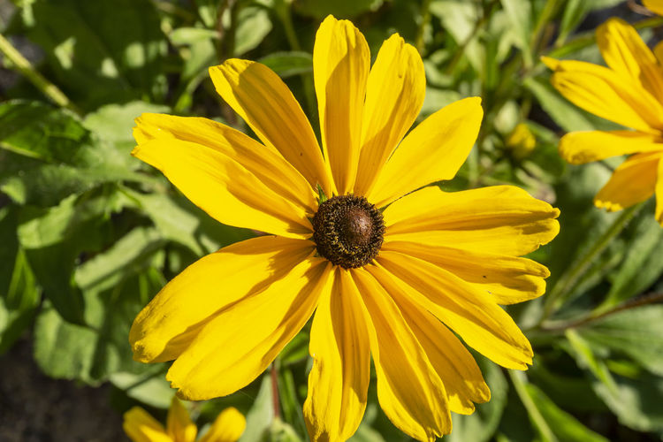 Berlin, Germany, October 10, 2018: Close-Up of Yellow Flower Berlin Germany 🇩🇪 Deutschland Horizontal No People Outdoors Color Image Yellow Flower Flowering Plant Fragility Vulnerability  Freshness Petal Flower Head Plant Inflorescence Beauty In Nature Close-up Nature Growth Backgrounds Copy Space Season  Single Flower Park