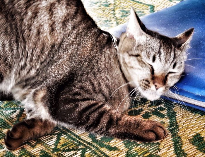 Cat Feline Fur Enjoying Life Purrfect