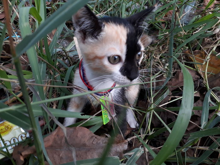 Pets One Animal Animal Domestic Animals Portrait Cute Looking At Camera Mammal Cat Cats young animal Animal Themes Outdoors Day No People Grass Close-up