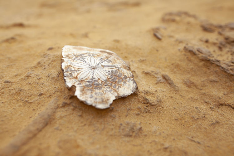 Taiwan Travel Close-up No People Nature Selective Focus Sand Solid Rock Rock - Object Shape Outdoors High Angle View Simplicity SHELLFISH  Fossil Brown Skinned Beauty White