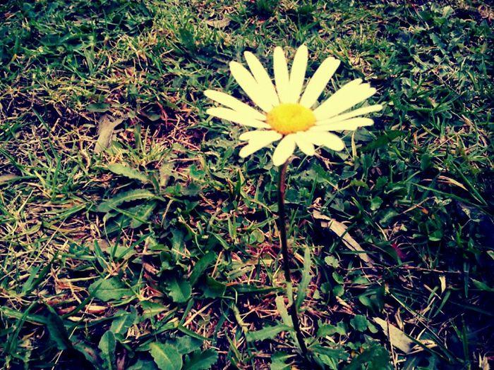 Nature Vintage White Flower Warm