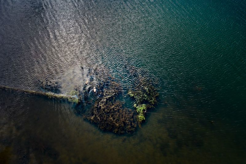 High angle view of turtle in sea