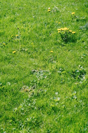 Full frame shot of green plants on field
