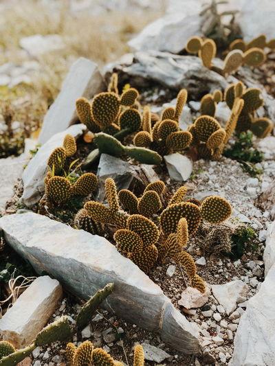 High angle view of cactus growing on land