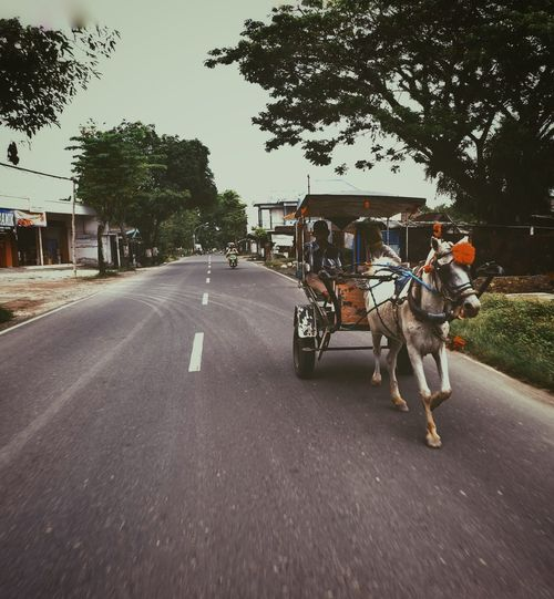 Delman Indonesia_photography Bojonegoro Delman Tradition Traditional Transportation EyeEmNewHere Streetphotography Transportation Road Street Horse Mode Of Transport Tree Horse Cart Outdoors Day Horsedrawn Carriage Working Animal