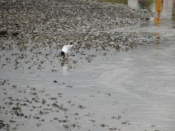 Möwe Beauty In Nature Strand Nordsee North Sea No People Mudflat Watt Sea Beach Bird Sea Gull Tranquility Tranquil Scene Sea Scape Spiegelung Im Wasser Reflections